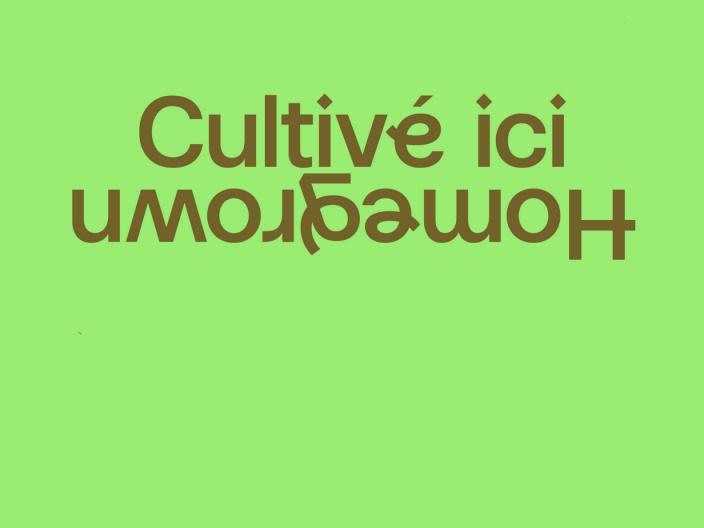 Devenez bénévole pour CULTIVÉ ICI / HOMEGROWN | Le festival de la relève musicale